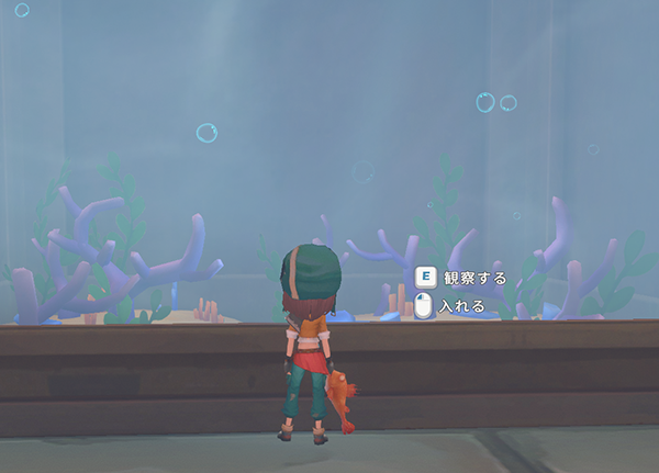 博物館 魚 水槽